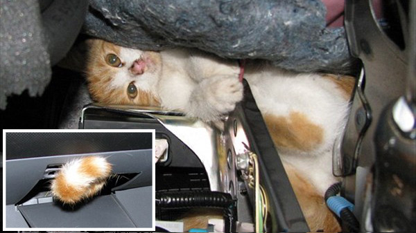 Image of こんなにいる「車から救出された猫」画像集
