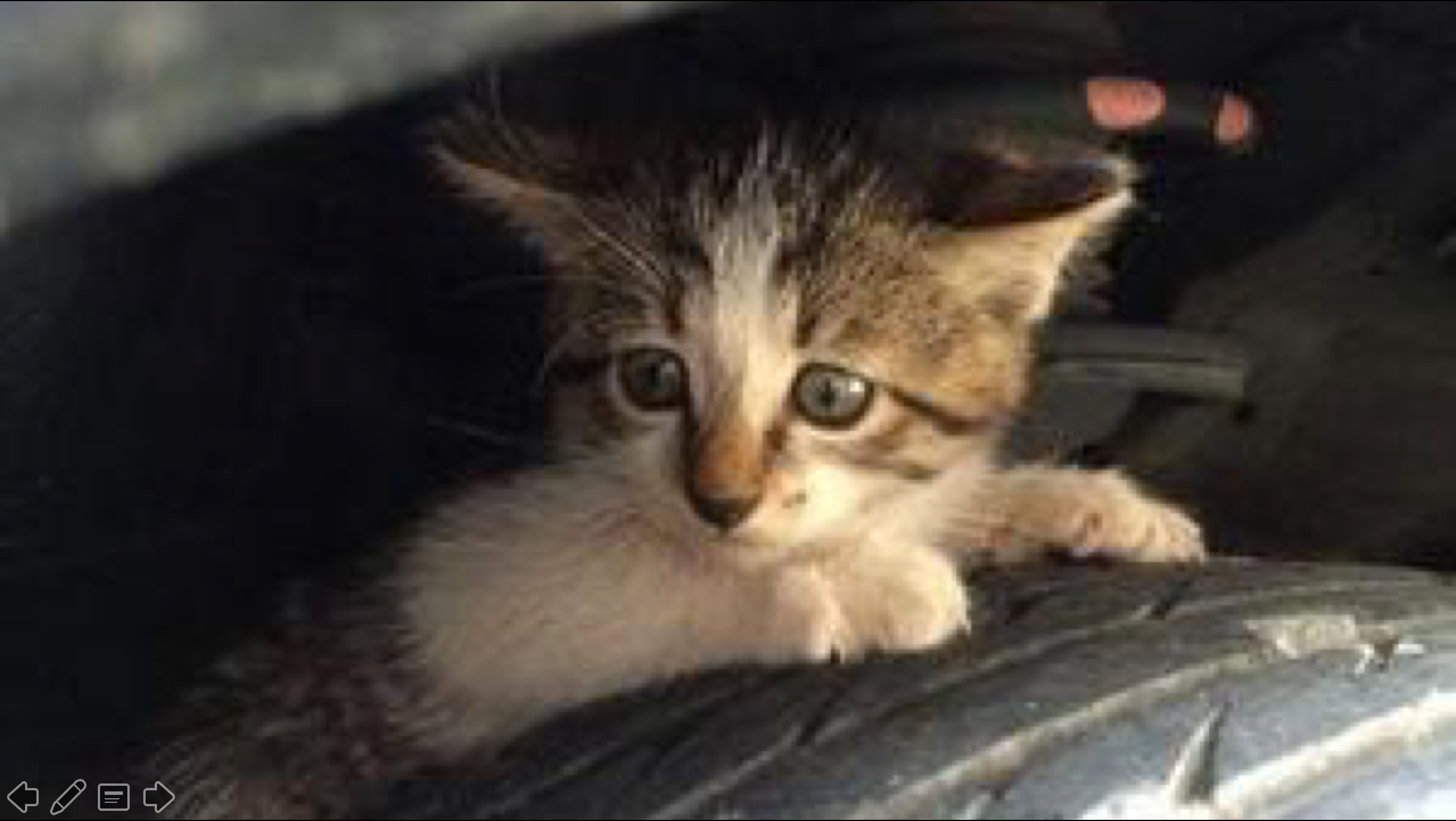 Image of 【お願い】乗車前に「#猫バンバン」で救える命。