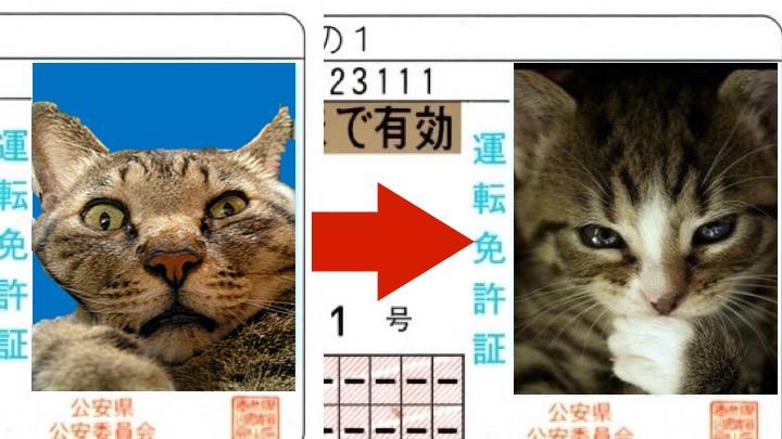 Image of 【免許証】写真の「持ち込み」方と、写りを良くする方法!芸能人の免許写真も解説!!